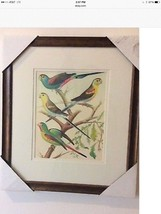 Parakeet Wall Art Print With Wood Frame Double Matted. Brand New. - $20.00