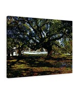 "Shady Oak Canvas Giclée 24"" x 18"" Gallery Wrapped Print by BL Lawson - $69.99"