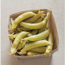 Honey Snap II Seed , Vegetable Seeds,Ship From US - $17.00