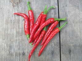 25 Long Thin Red Cayenne Pepper Seeds 2019 ( Non-Gmo Free Shipping! ) - $5.12