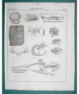 FOSSILS Trilobite Megatherium SKull Human Skeleton etc - 1825 Antique Print - $13.77