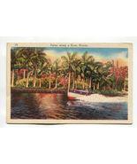 Palms along a River Florida - $0.79