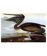 Audubon Brown Pelican 30x44 Art Print Audubon Edition Hand Numbered Edition - $118.04