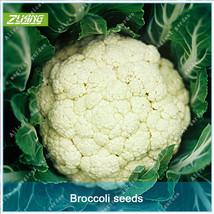 100 Pcs Chinese White Cauliflower Vegetables Bonsai Seeds Fresh Nature O... - $4.45