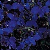 SHIP FROM US 50 Seeds Lobelia Regatta Midnight Blue Flower,DIY SB Flower... - £23.08 GBP