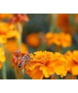 4 Variety Easy to grow Wildflower Bee Mix Fresh Seeds #TLM1 - $15.99+