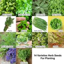 14 Herbs Varieties 5000 American Seeds Non GMO Basil Thyme Sage Garlic S... - $36.95