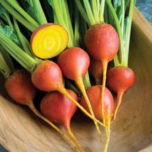 Touchstone Gold Beet Seed ,Vegetable Seeds,  Ship From US - $15.00