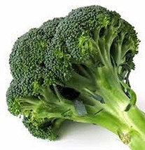 Broccoli Calabrese Seeds (75) Heirloom Seeds Non GMO Jacobs Ladder Ent. - $4.99