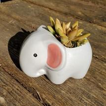 "Elephant Planter & Succulent, 4"" grey ceramic animal, Golden Glow Sedum Adolphi  image 1"