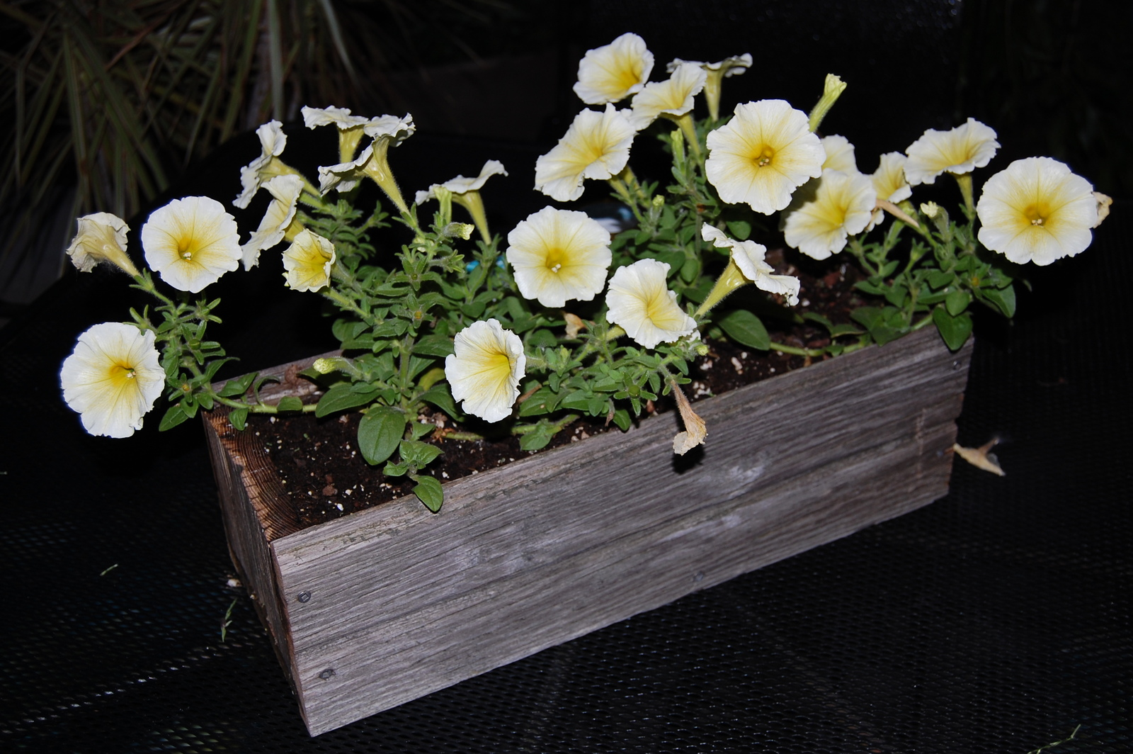 Reclaimed Barn Siding Planter Box, Succulent Box, Rustic, Reclaimed