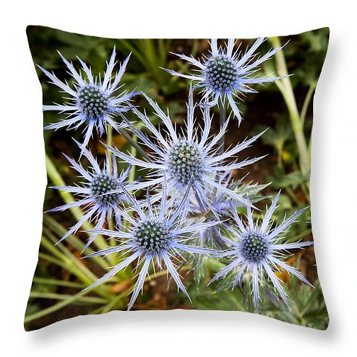 Spectacular sea holly flowers pillow