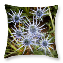 Spectacular Blue Stem Sea Holly, Throw Pillow, ... - $41.99 - $69.99