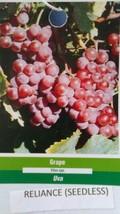 Reliance Seedless Grape 3 Gal Vine Plants Vines Plant Grapes Vineyards G... - $53.30