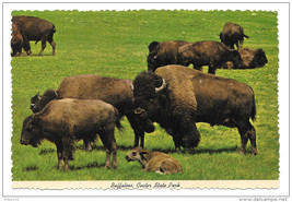 Buffaloes Bison Custer State Park South Dakota Black Hills Vintage Postc... - $4.99