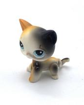 Littlest Pet Shop Authentic # 106 White Orange Black Calico Short Hair Blue Eyes - $11.48