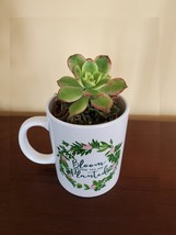 """Succulent in Mug """"Bloom Where You Are Planted"""", ceramic white planter Plant Gift image 2"""