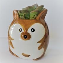 "Ceramic Animal Planter & Live Succulent 2"" Kangaroo Pot Echeveria Green Burgundy image 4"