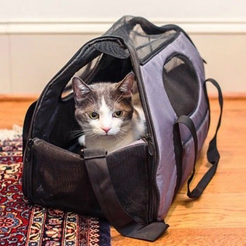 CARRY ME PADDED PET CARRIER CAT DOG AIRLINE OR CAR GEN7PETS for sale  USA