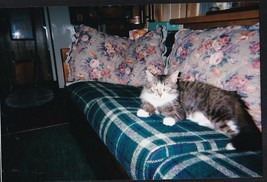 Vintage Photograph Adorable Cat / Kitten Laying on Couch - $6.93