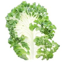 5 Grams Seeds of Casper Kale - $29.80