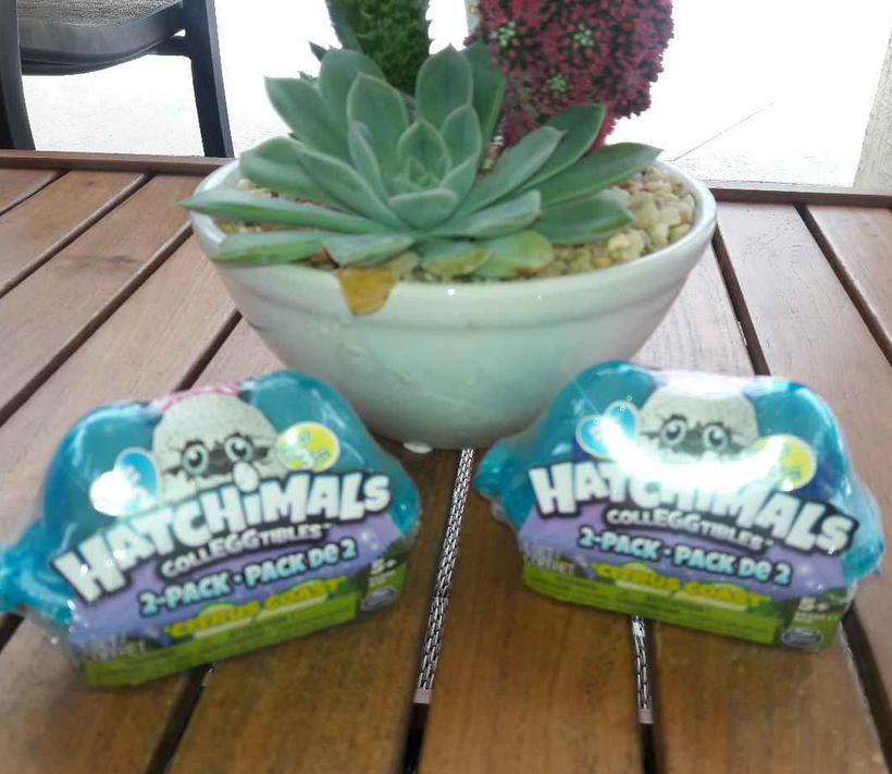 NEW HATCHIMALS SEASON 2 COLLEGGTIBLES 2 PACK CITRUS COAST LOT 2 (4 eggs total)