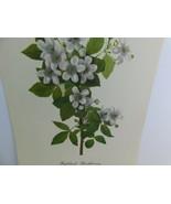 VTG Highbush Blackberry (Rubus Argutus)  9x12 Frameable Print Nature Flower - $11.28