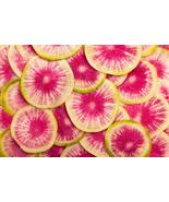 Watermelon radish Seeds | Daikon Radish Seeds | 10 seeds - $12.34