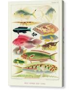 The Great Barrier Reef of Australia Chromo XVI 1893 William Saville-Kent... - $91.63+