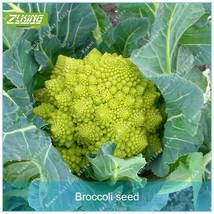 100 Cauliflower Seed Vegetable Seeds Bonsai Plants For Home Garden Exotic - $2.18