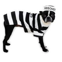 Casual Canine Prison Pooch Costume, X-Small - $26.57