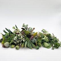 30 or 50 Assorted Succulent & Cactus Cuttings. Great for Terrariums, Mini Garden image 4