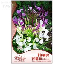 Rare Beautiful Drunk Butterfly Flower Seeds, Original Pack, 60 seeds - $1.50