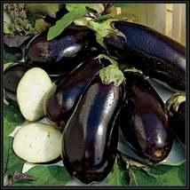 50Pcs Eggplant Black Beauty Vegetable Seeds Solanum Melongena Seed - $19.84
