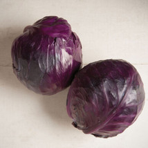Integro Organic Cabbage Seed Seed ,Vegetable Seeds, Ship From US - $15.00