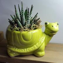 "Succulent in Ceramic Turtle Pot Live Haworthia Zebra Plant 5"" Green Planter image 2"