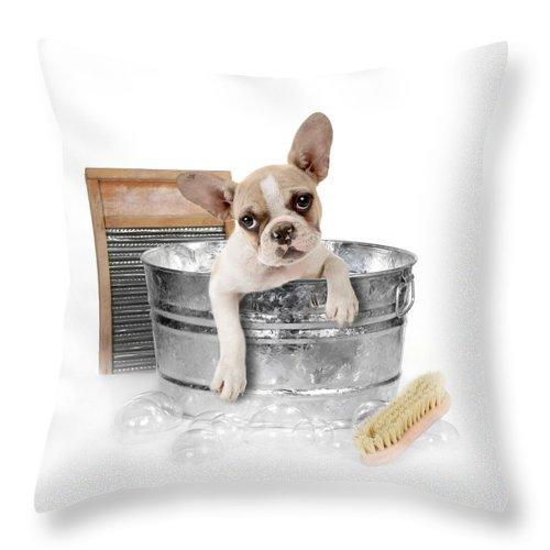 "Dog Getting A Bath In A Washtub Throw Pillow 14"" x 14"" up to 26"" x 26"""