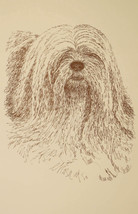 Lhasa Apso Dog Art Print #236 WORD DRAWING Kline will add your dogs name free. - $49.95
