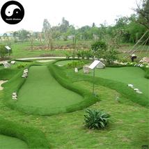 Buy Evergreen Golf Lawn Grass Seeds 500pcs Plant Evergreen Garden Lawn G... - $5.99