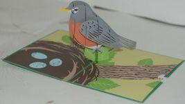Lovepop LP1791 Robin Pop Up Card Slide Out Note White Envelope Cellophane Wrap image 3