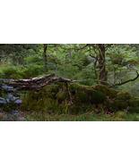 Scottish Highland Scenic A3 Print - Reptilian - $50.00