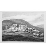 1801 ORIGINAL ETCHING Print by Howitt - Herd of Cows Sheep Shepherd & Dog - $25.20