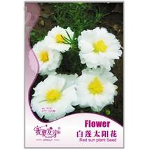 220 Seed Beautiful White Sun Plant Seeds, DIY Healthy Herbs DO - $8.99