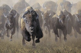Full Throttle by Kyle Sims Wildlife Buffalo Bison Limited Edition Canvas 24x36 - $787.05