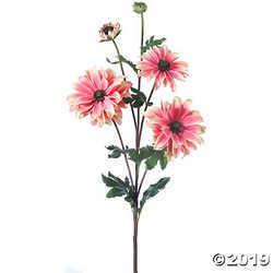"Shasta Daisy X3 + Bud 24""-Pink"