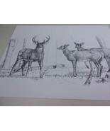 Whitetail Deer Wildlife Buck Does Art Signed Jack Hagerman # 04 of 100 L... - $66.75