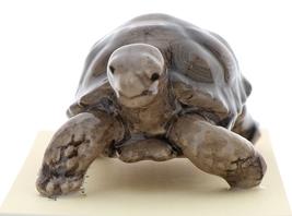 Hagen-Renaker Miniature Ceramic Turtle Figurine Desert Tortoise image 2