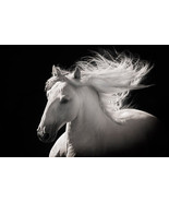 Grey Ghost by Robert Dawson Canvas Giclee White Horse Open Edition - $246.51