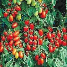 20 Seeds of Juliet Tomato - $20.79