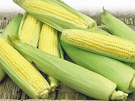 Corn, Golden Bantam Yellow Corn, Heirloom, Non-GMO,50 Seeds, Delicious and Sweet - $4.49